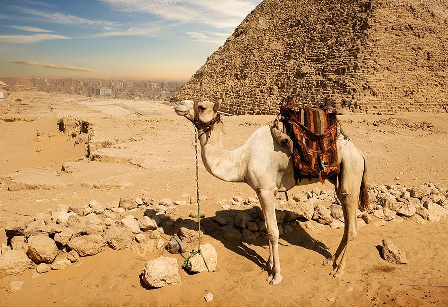 Cairo one day trip from El Gouna and Hurghada by a private van