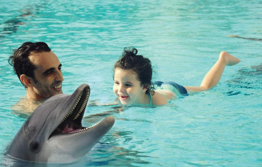 swimming with dolphin day trip hurghada show