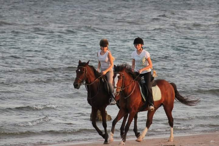 Horse riding Hurghada by the sea